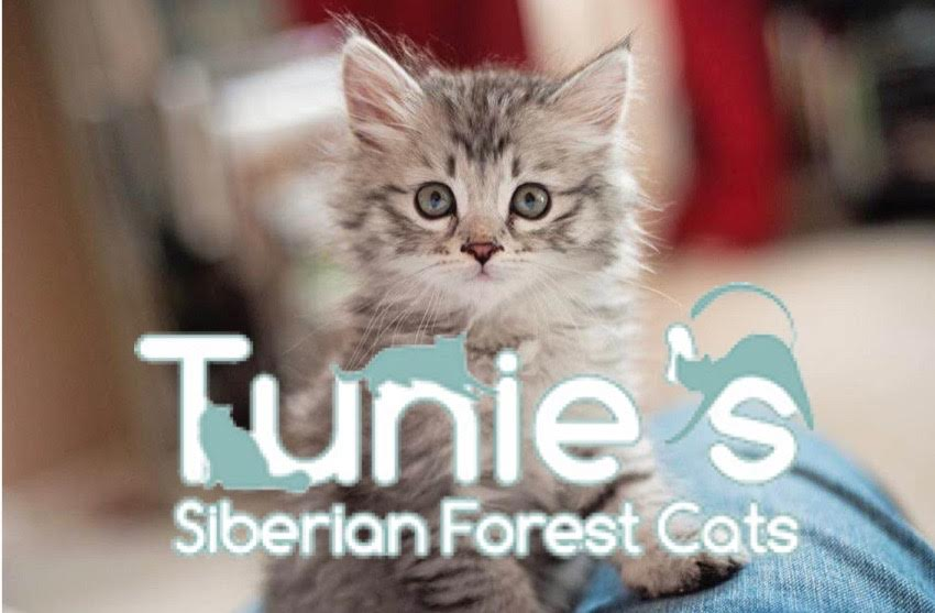 Pet Wants Minneapolis Partners with Tunies Siberians