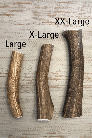 Whole Elk Antler Large for Aggressive Chewers Grade A+
